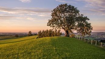 tree-1705875_960_720